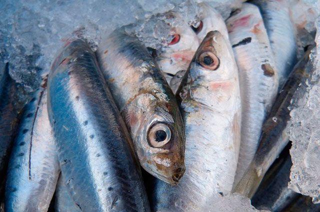 Alimentos que podem sumir com o aquecimento global - Sardinha
