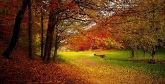 Sonhar com o outono