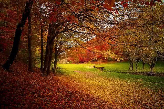 Árvores durante o outono
