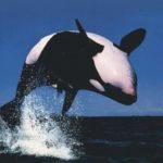 Sonhar com baleia – Significados