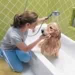 Como dar banho no meu cachorro em casa