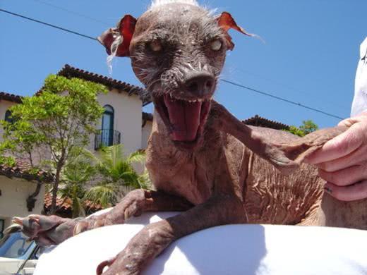 Sam, imagem deste terrível cachorrinho