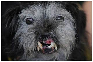Cãozinho de sorriso bem diferente