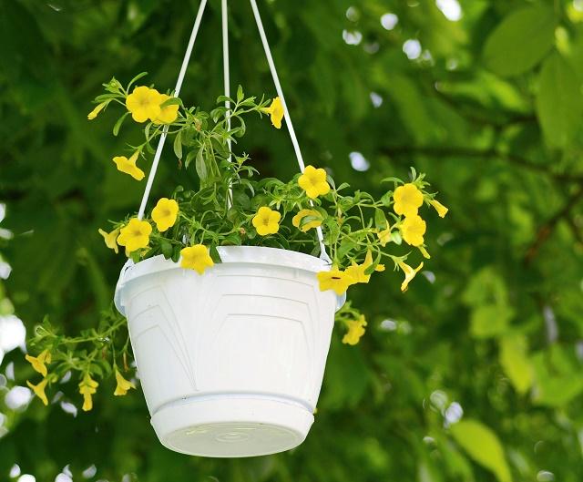Calibrachoa amarela