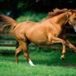 O que significa sonhar com cavalo?