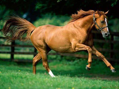 Cavalo correndo