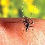 Como é o tratamento contra a febre amarela?