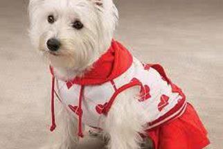 Como fazer roupas para cachorro