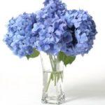 Sites para comprar flores online