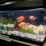 Dicas de como comprar um aquário