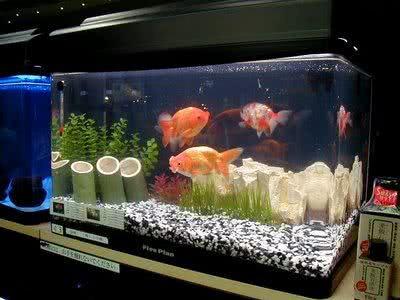 aquarios