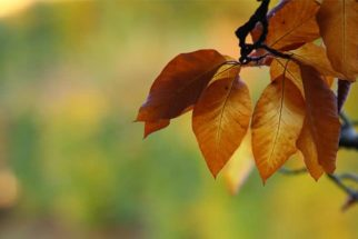 Sonhar com folha