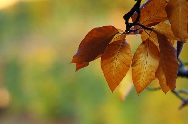 Folhas de árvore