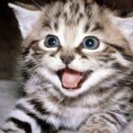 O que significa sonhar com gatos?