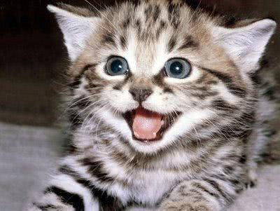 Sonhar com gatos - qual o significado?