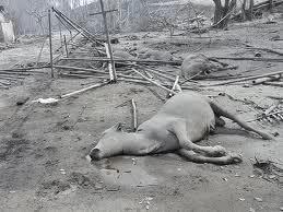 Sonhar com animais mortos