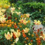 Fotos de jardins – inverno, suspensos e verticais