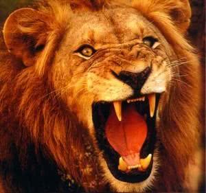 Sonhar com leão, o que quer dizer?
