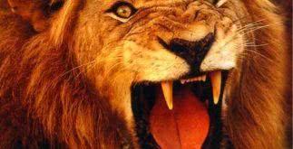 Significado dos sonhos – Leão