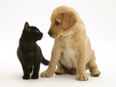Lista de nomes para cachorros e gatos