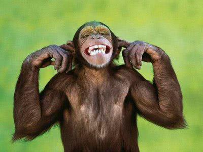 Sonhar com macaco, o que significa?