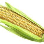 Sonhar com milho – Significados para este sonho