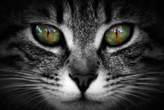 Centenas de nomes para gatos