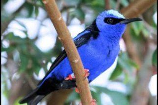 Sonhar com passarinho – O que significa?