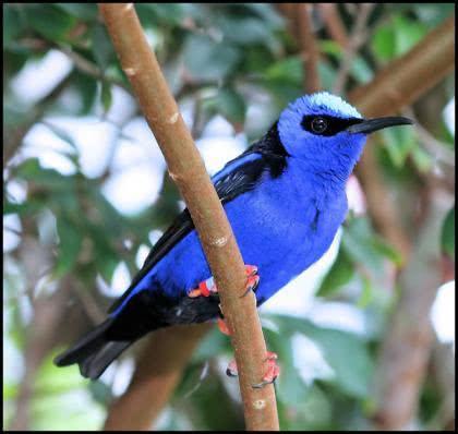 Sonhar com passarinho significa o quê?