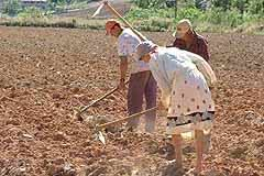 Trabalhadores rurais