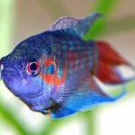 Interpretando sonhos – Sonhar com peixe, o que significa?