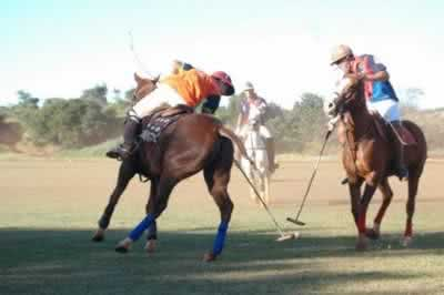 Polo Equestre