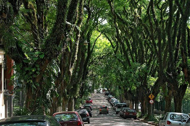 A rua Gonçalo de Carvalho é um dos logradouros mais bonitos do mundo