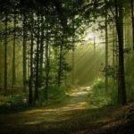Sonhar com floresta – Qual o significado deste sonho?