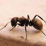Sonhar com formigas