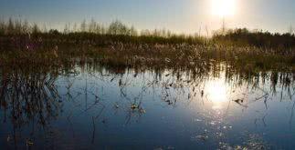 Sonhar com pântano