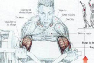 Variações de exercícios/treinos para bíceps